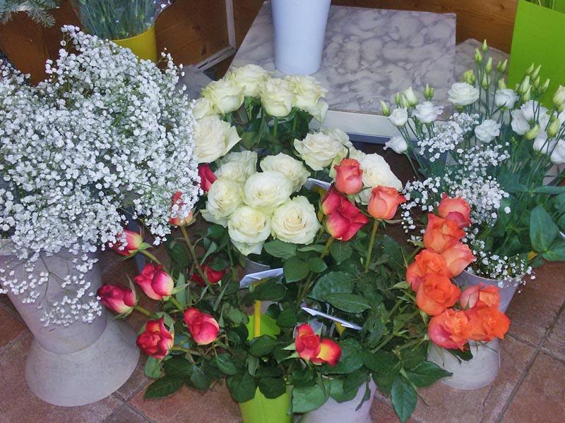 Vendita piante e fiori a prato e provincia for Vendita piante e fiori