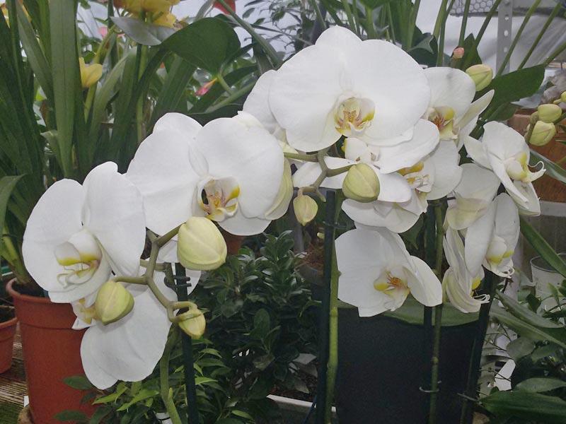 Vendita piante e fiori a prato e provincia for Orchidee da esterno
